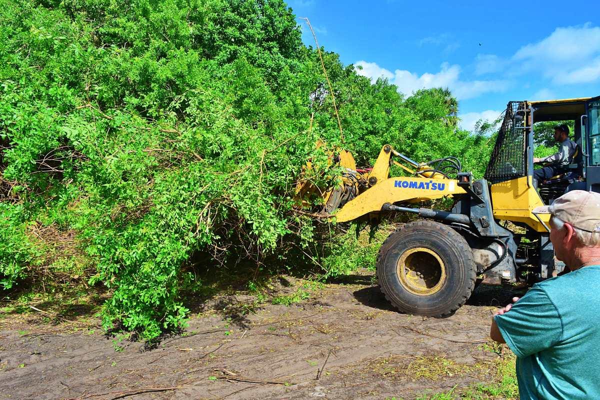Tractors remove invasive vegetation at Ocean Strand Park