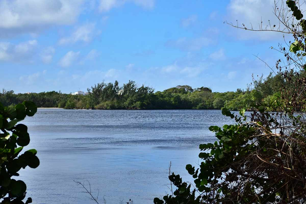 View of the Intracoastal from newly cleared Ocean Strand Park